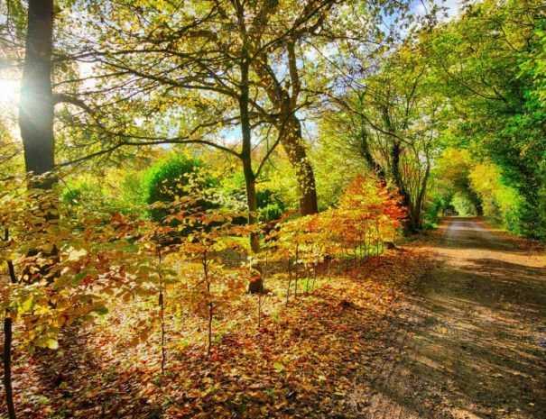 Autumn Breaks at Felbrigg Lodge hotel in North Norfolk